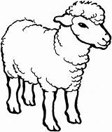 Sheep Coloring Outline Pages Male Drawing Line Alpha Colouring Minecraft Template Cartoon Printable Christmas Animals Farm Face Drawings Bighorn Coloringsky sketch template