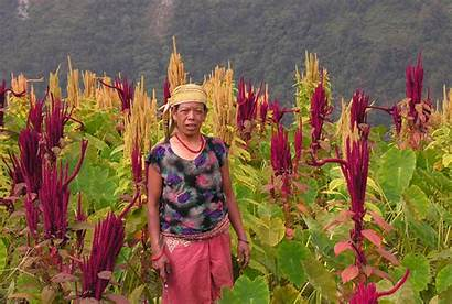 Indigenous Environment Nepal Traditional Knowledge Change Threatens