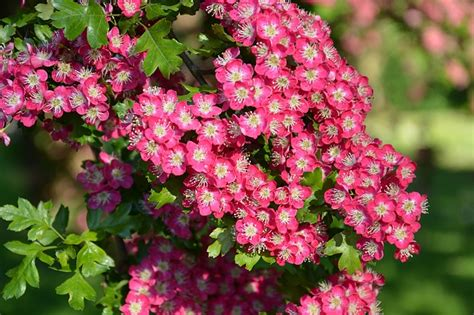 Small Pink Flowers Public Domain Free Photos For Download