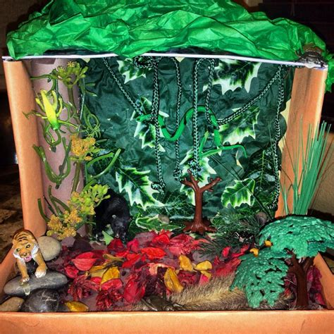 Forest Shoe Box Project  Science Experiment Pinterest
