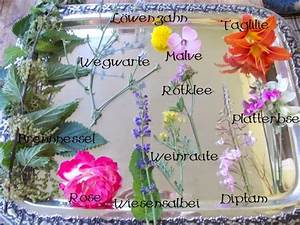 Welche Blumen Kann Man Essen : unkrautgourmet pflanzen essen rezepte und mehr ~ Watch28wear.com Haus und Dekorationen