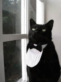 cat tuxedo cat tuxedo classic black tie