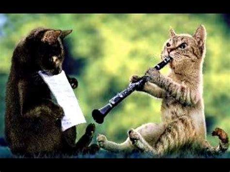 cat plays  clarinet  oboe al markel youtube