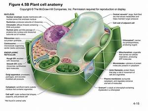 Labeled Plant Cell And Functions In 2019