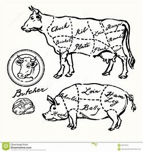 Pork And Beef Cuts Stock Vector