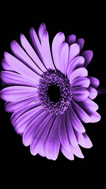 Purple Iphone Flowers Flower Wallpapers Background Violet