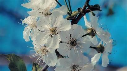 Spring Flowers Bloom Petals Background Branch 720p