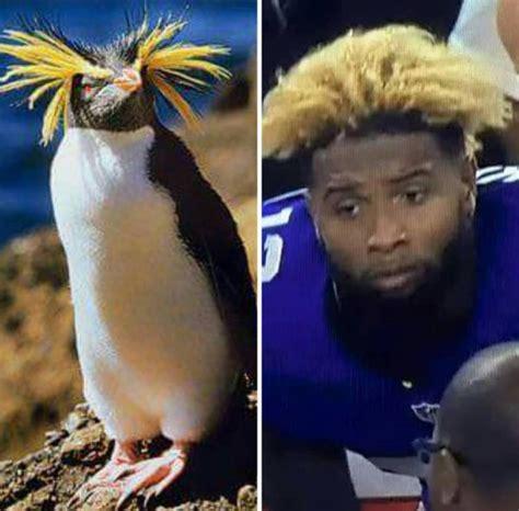 penguin meme sportige