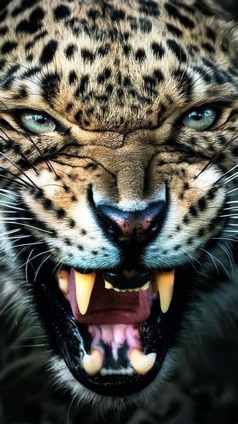 sor khlfyat nmr  images angry animals animals