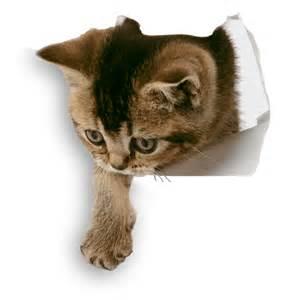 eco friendly cat litter ecograin cat litter enviromentally friendly cat litter