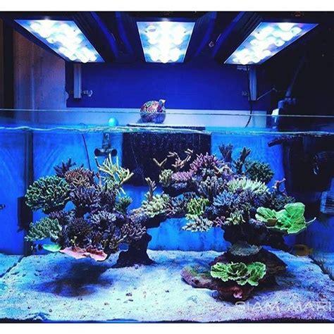 saltwater aquarium aquascape designs image gallery reef aquascaping