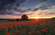 Sunset Flower Field Landscape