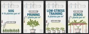 Combien De Watt Par M2 : combien de plants de cannabis cultiver par m tre carr rqs blog ~ Melissatoandfro.com Idées de Décoration