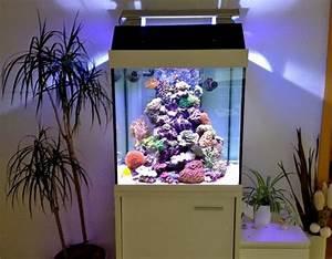 Aquarium Einrichten 60l : die kosten f r ein meerwasseraquarium meerwasser ~ Michelbontemps.com Haus und Dekorationen