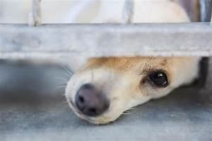 Sad shelter dog finds forever home after someone takes her ...