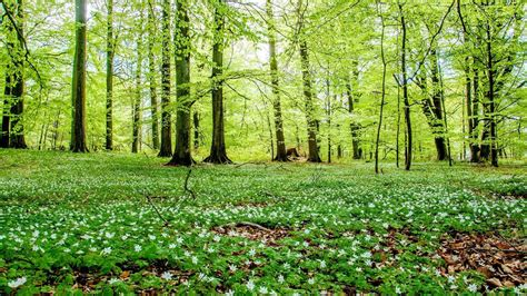 Free Green Forest Background by Green Forest Wallpaper 71 Images