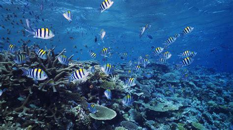 Hd Ocean Sea Life Wallpapers 47 Images