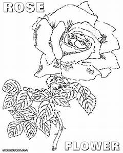 Coloring Flower Page Top Ten Popular Flowers Free Tropical ...