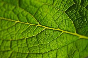 Free Images : nature, field, texture, leaf, flower, green ...