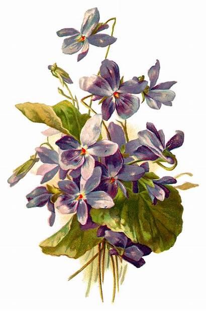 Illustration Forget Clipart Flower Botanical Flowers Violet