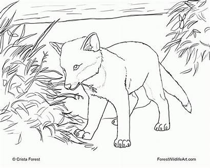 Coloring Fox Pages Printable Popular