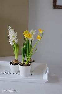 Blumenladen München Schwabing : darf ich vorstellen love lilies ~ Markanthonyermac.com Haus und Dekorationen