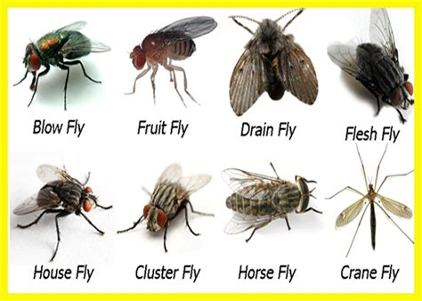 What Might Gnats, Fruitflies, Furniture, And Shoes Mean In
