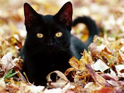 Cat Wallpapers Eyes Halloween Yellow Cats Background