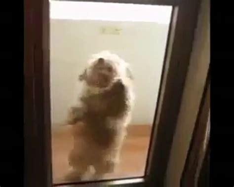Funny Dancing Dog