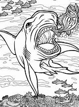 Coloring Shark Pages Quiver App Sharks Tiger Printable Animals Colouring Ocean Getdrawings Print Dwellers Dover Getcolorings Lineart sketch template