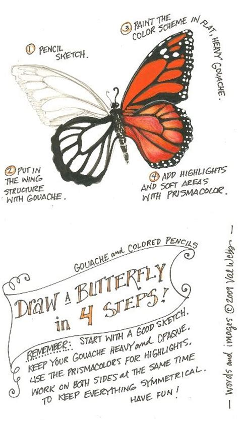 images  butterfly drawings  pinterest