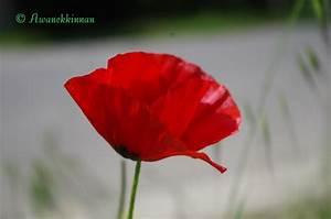 Tapis de champ de fleursmassages et fleurs de bach champ for Ou acheter le tapis champ de fleurs