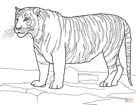 ausmalbild weisser bengalischer tiger ausmalbilder