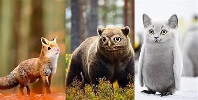 Animals Hybrid Imaginary Lol Artist Karissa 16th