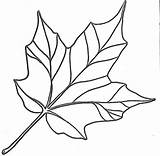 Maple Syrup Coloring Pages Printable Getcolorings Print Indiana Pure sketch template