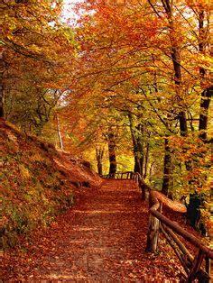 autumn night  dudykaa  deviantart