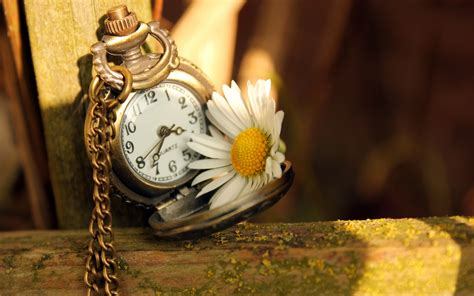 time flowers clock time daisy flower wallpaper 1680x1050 22691