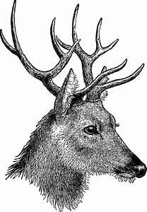 Vintage Reindeer Clipart - ClipartXtras