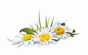 Pot De Fleur Transparent : fleurs des jardins des champs page 5 ~ Teatrodelosmanantiales.com Idées de Décoration
