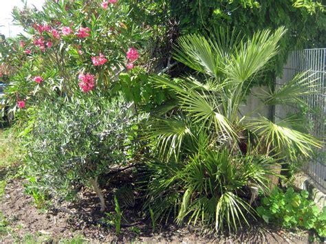 Exoten Im Garten  Frühlingstipps  Diese Rombergs
