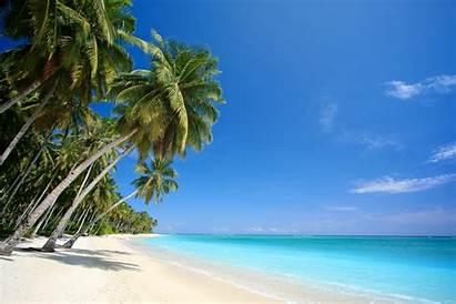 Palm Beach Trees Landscape Sea Nature Desktop