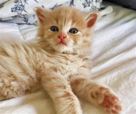 50+ Cute Cat Names For Male & Female Catkitten Cute