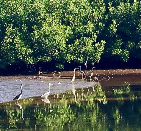Everglades City Boat Tours by Birds Bild Fr 229 N Everglades National Park Boat Tours