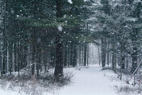 snowing   forest duncanco