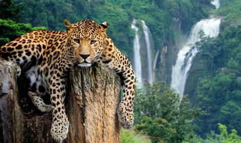 Ceļojums - Ceļojums uz Āfriku: ĀFRIKAS KOLORĪTS ...