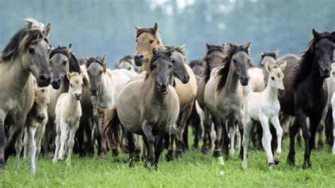animal wildlife wallpapers amazing animals horses background