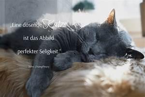 Wie Fange Ich Eine Katze : die sch nsten katzenspr che spruchbilder katzenzitate weisheiten ~ Markanthonyermac.com Haus und Dekorationen