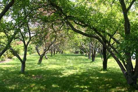 garden trees file littlefield garden trees jpg wikimedia commons