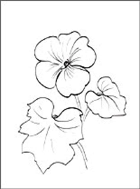 geranium coloring page  print  coloring pages