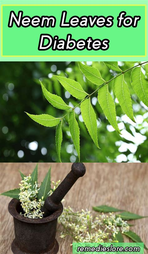 neem leaves  diabetes remedies lore